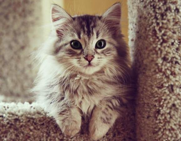 的小猫咪    酷特网,分享卡哇伊的动物萌图!动物萌