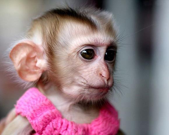 很无辜的猴子 -- 酷特网,分享卡哇伊的动物萌图!动物萌宠图片分享网站