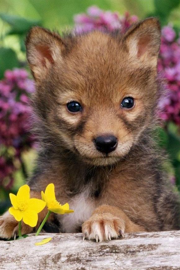 的脸-- 酷特网,分享卡哇伊的动物萌图!动物萌 .