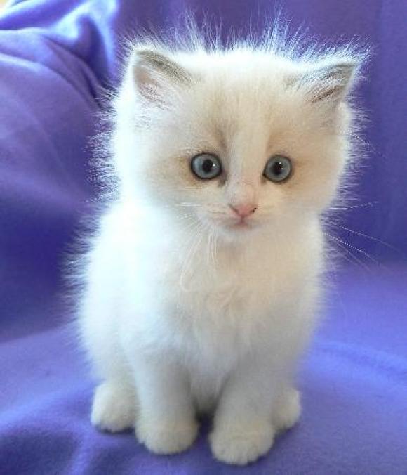 可爱的猫    酷特网,分享卡哇伊的动物萌图!动物萌