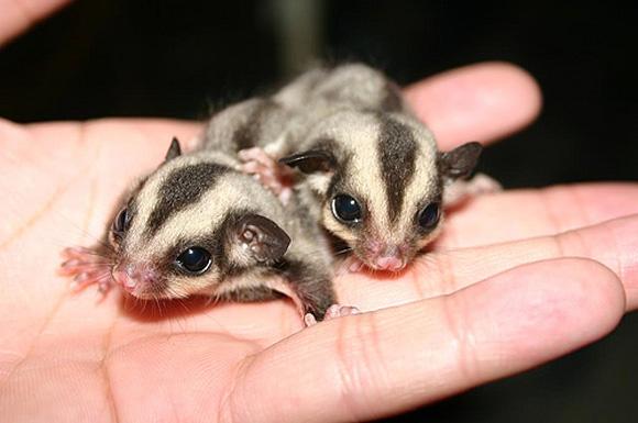 刚出生的小狗狗,刚出生的小动物,刚出生的小狗_点力