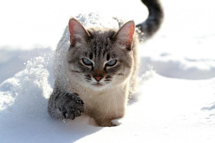 http://www.cuter.cn/wp-content/uploads/2012/07/1341713864.jpg