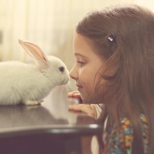 兔子吃月饼的手画 兔子吃月饼的图片 兔子吃月饼简笔画