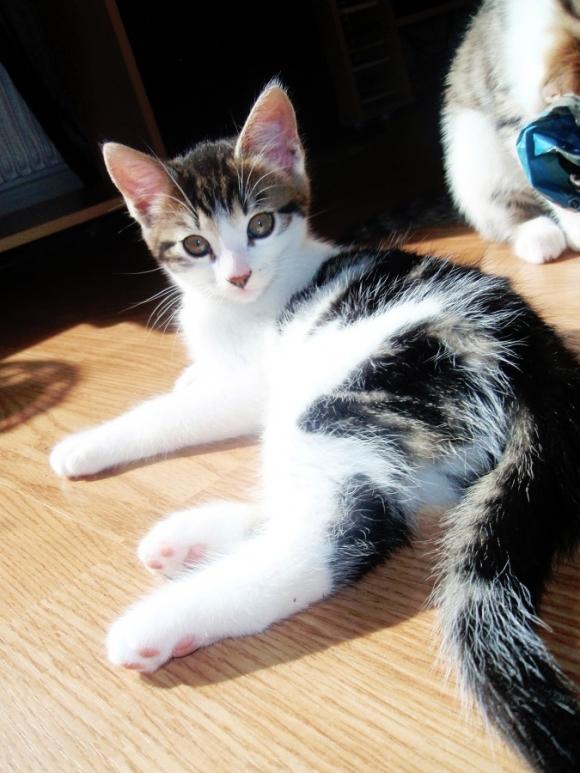 的小猫咪 酷特网,分享卡哇伊的动物萌图!动物