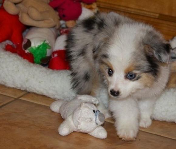 369宠物网_小狗和他的玩具--酷特网,分享卡哇伊的动物萌图!动物萌宠